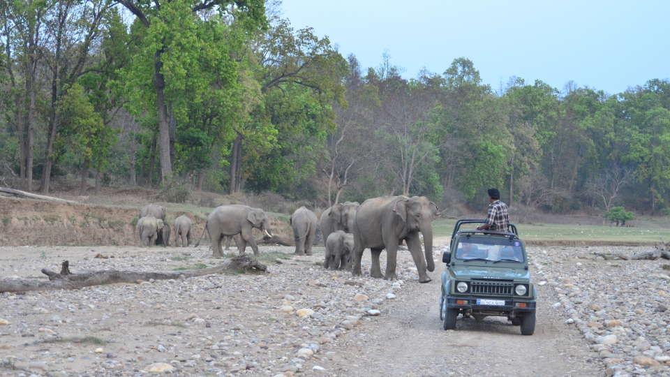 Wild Brook Retreat Rajaji National Park 5