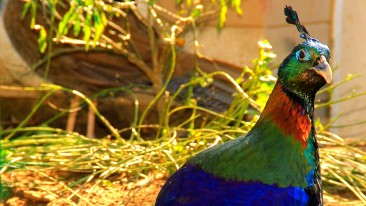Himalayan Bird Park Shimla