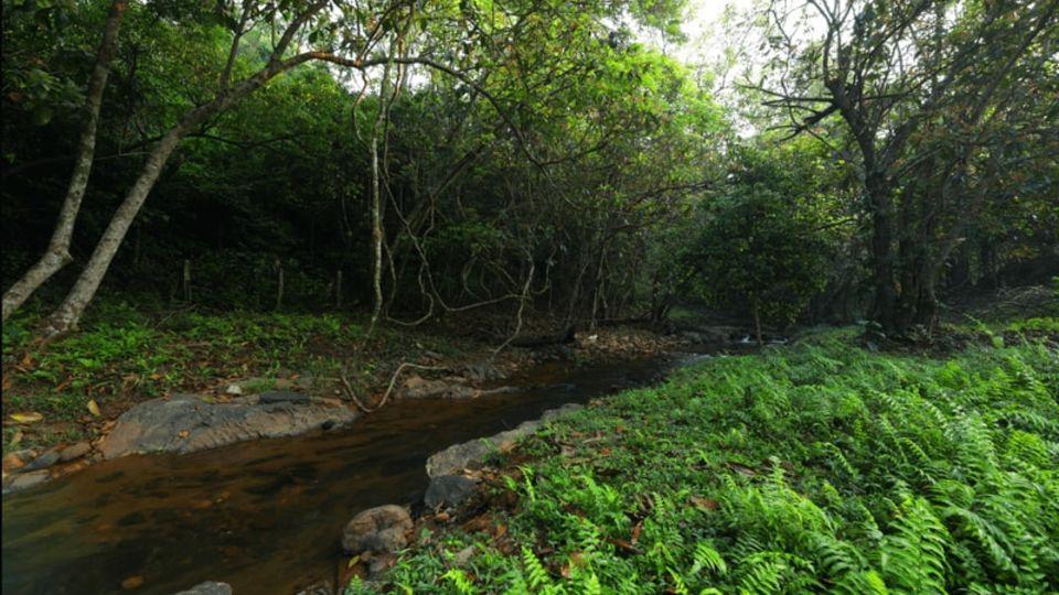 Rooms in Wayanad, Best Resorts in Wayanad, Nature Resorts in Vythiri 55