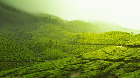 honeymoon resorts in Kerala 3