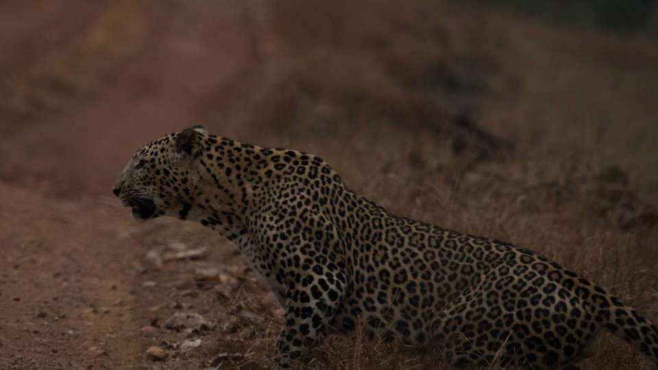 Wildlife resort near Nagzira Tiger Reserve, Asteya Nagzira Resort, National park in Nagzira