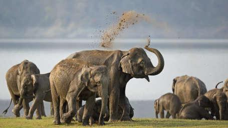 Leisure Hotels  elephant bath