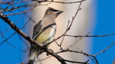 gray-bird-perching-on-tree-branch-704948