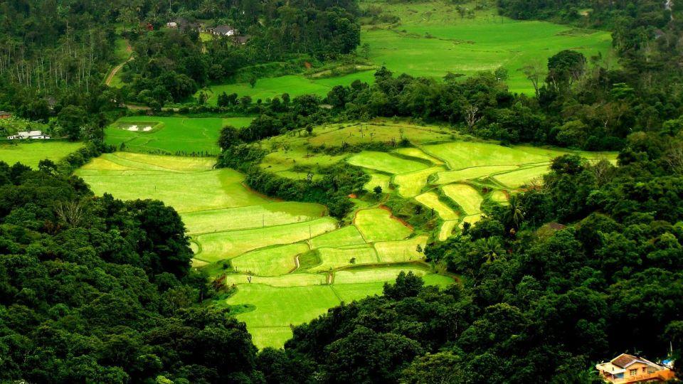 Coorg Jungle Camp, Kushalnagar Madikeri Coorg Valley Madikeri