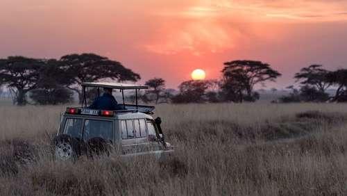 safari rzeg6x