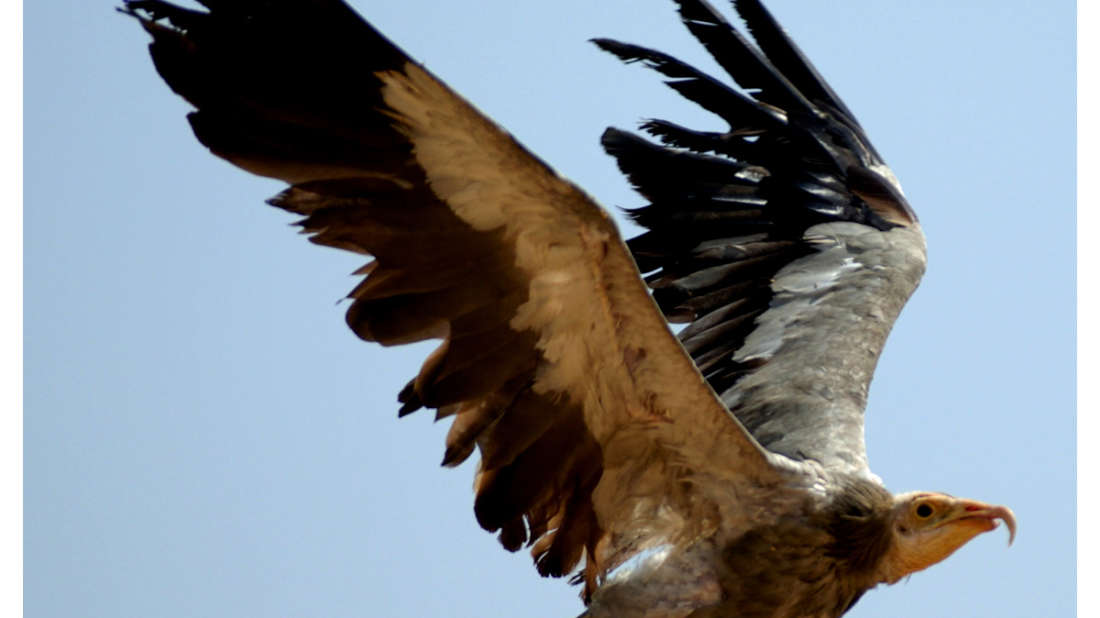 birds Shaheen Bagh Resort Best resorts in dehradun 18