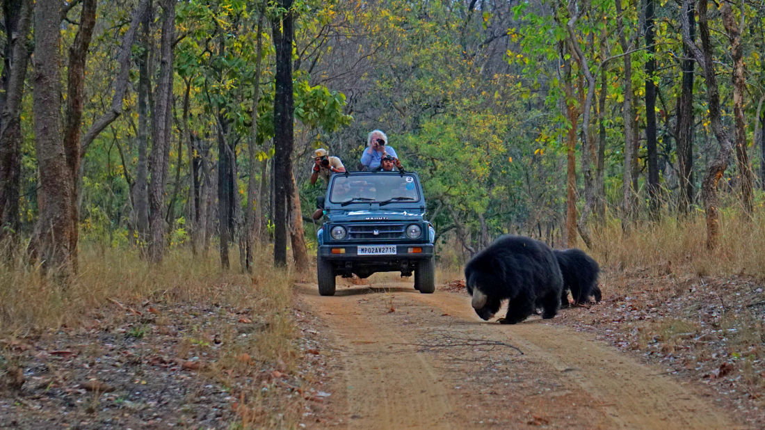 4X4 Game Drive at Satpura National Park, Wildlife Safari at Satpura National Park, Wildlife Sanctuary close to our resort in Satpura, Drive through the Satpura National Park, Satpura Resort, Jungle resorts in Madhya Pradesh, Forest resorts in Madhya Prades