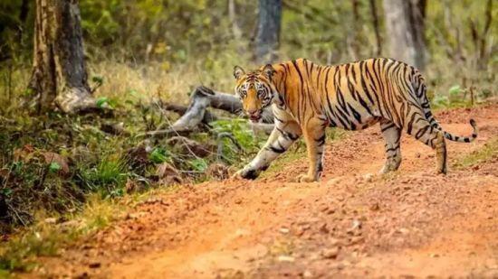 Tiger Safari Park Plaza Ludhiana Business Hotels in Ludhiana