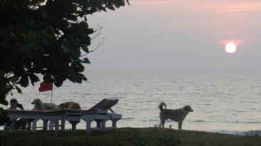 Rococco Ashvem Resort, Mandrem, Goa Goa Pets Rococco Ashevm Resort Goa