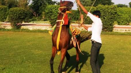 Horse Dance Show at Umaid Lake Palace Hotel Kalakho Dausa Rajasthan
