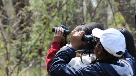 The Haveli Hari Ganga  Haridwar Birdwatching Activities at The Haveli Hari Ganga Hotel Haridwar