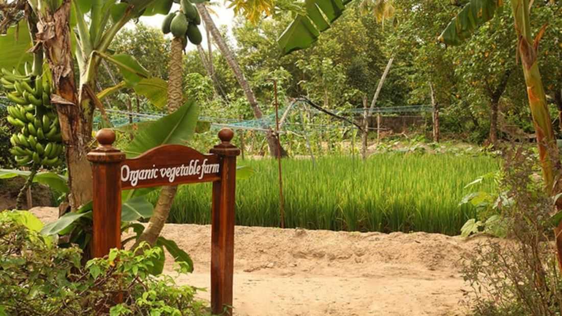 abad-turtle-organic-vegetable-farm, Contact Beach Resort in Marari, Beach resorts in Allepey, 4 Star Resorts in Alleppey, Best Beach Resorts in Alleppey, Best Beach Resorts Near Cochin, Beach Resorts in Kerala