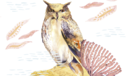 early bird offer at Owl and the Pussycat hotel and restaurant in galle