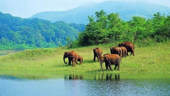 periyar-wildlife-sanctuary