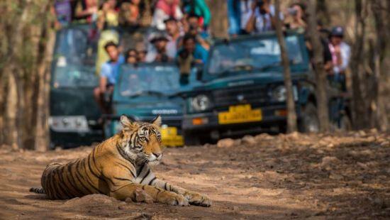 final safari image