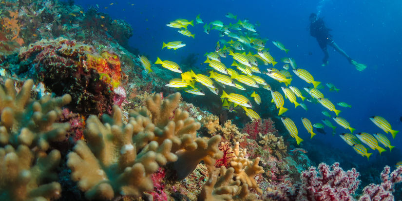 Fun diving know the dive sites