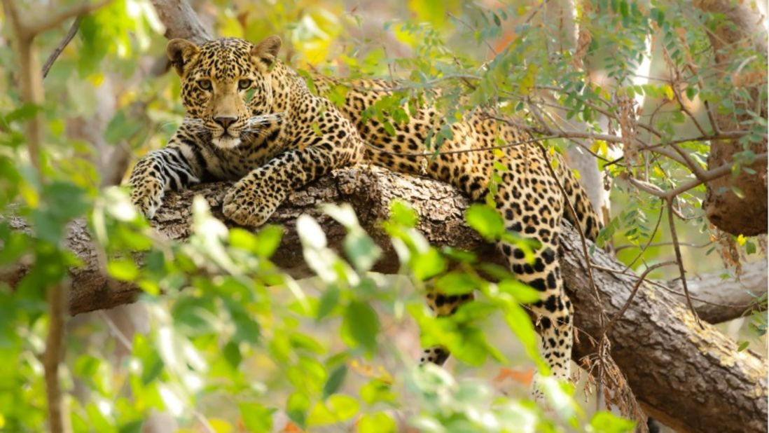 Satpura National Park Resorts, Satpura Resort, Jungle resorts in Madhya Pradesh, Forest resorts in Madhya Pradesh,  Wildlife resorts in Madhya Pradesh