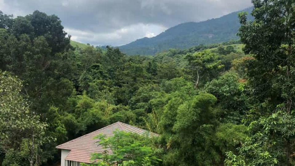 Rooms in Wayanad, Best Resorts in Wayanad, Nature Resorts in Vythiri 17