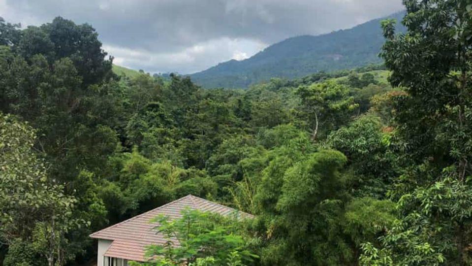 Rooms in Wayanad, Best Resorts in Wayanad, Nature Resorts in Vythiri 17