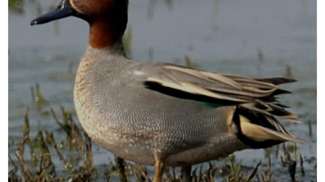 birds Shaheen Bagh Resort Best resorts in dehradun 16
