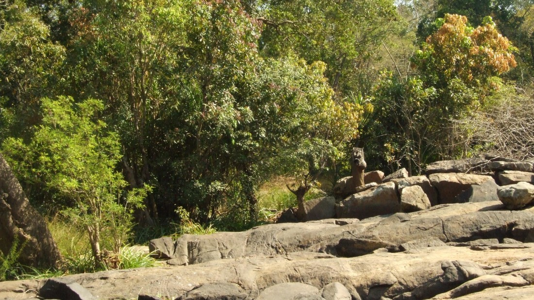 Animals in Coorg, Amanvana Resort And Spa, Coorg Resort