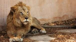 Hotel Abhiraj Palace Jaipur Jaipur Jaipur Zoo
