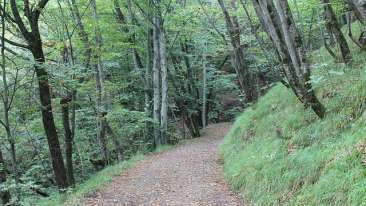 Forrest Rajaji National Park Resort Dehradun  Nature Walk