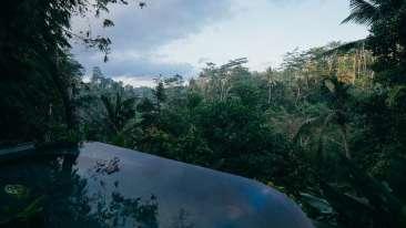 Forrest Rajaji National Park Resort Dehradun  Offers