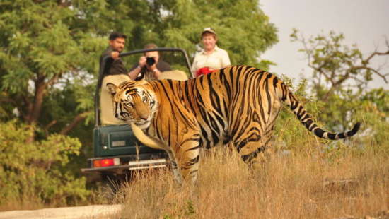 Ranthambore National Park 1