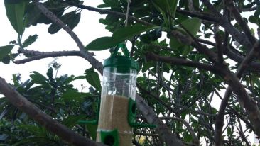 World sparrow day, The Orchid Hotel, Eco-Friendly Hotel In Pune 1