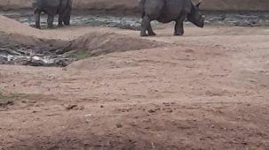 mysore-zoo-rhinos