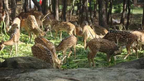 Malsi Deer Park, Shaheen Bagh Resort, Dehradun