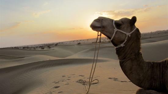 Sam Sand Dunes Sairafort Sarovar Portico Jaisalmer hotel palace in jaisalmer