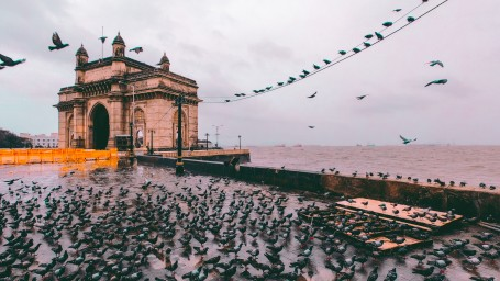 flock-of-birds-gathering-on-concrete-pavement-near-sea-2480956