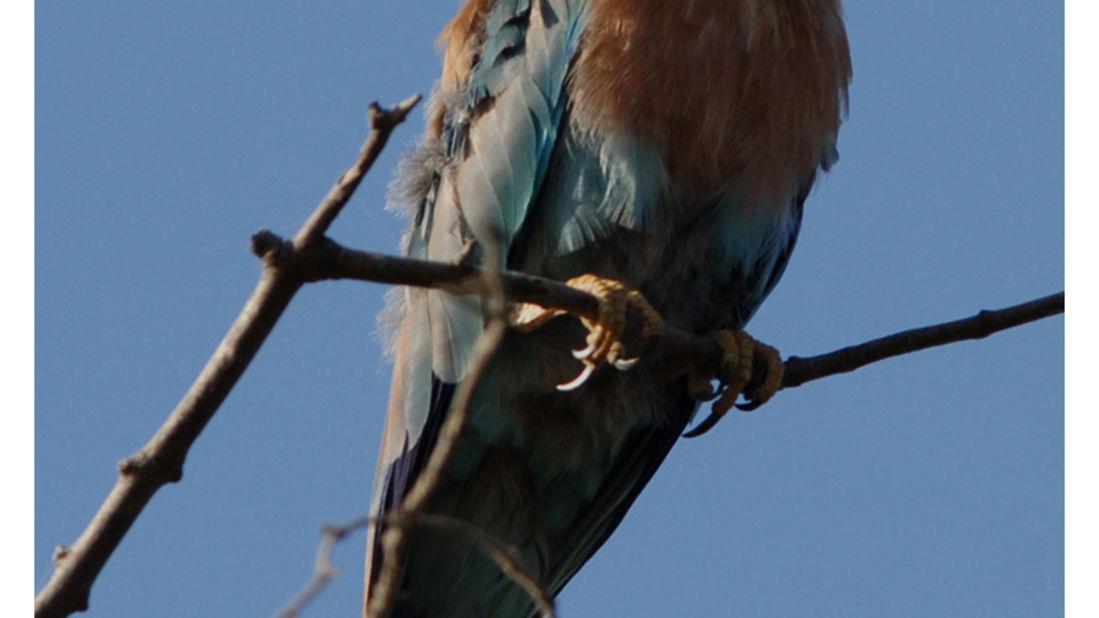 birds Shaheen Bagh Resort Best resorts in dehradun 19