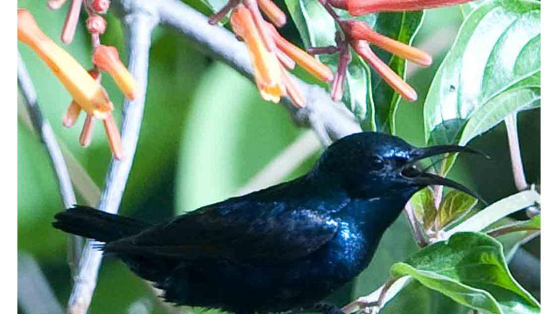 birds Shaheen Bagh Resort Best resorts in dehradun 30