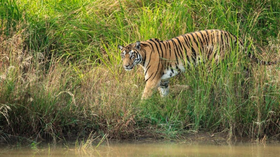 Wildlife Sanctuary close to our resort in Satpura, Drive through the Satpura National Park, Satpura Resort, Jungle resorts in Madhya Pradesh, Forest resorts in Madhya Pradesh,  Wildlife resorts in Madhya Pradesh