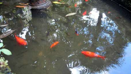 White Conch Residency, Gangtok Gangtok Garden White Conch Residency Gangtok