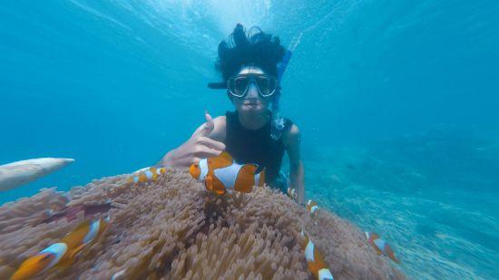 photo-of-person-swimming-near-school-of-clown-fish-2744596