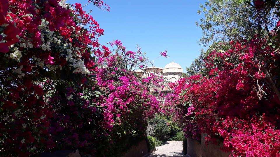 Flora Tijara Fort-Palace - 19th Century Alwar 1
