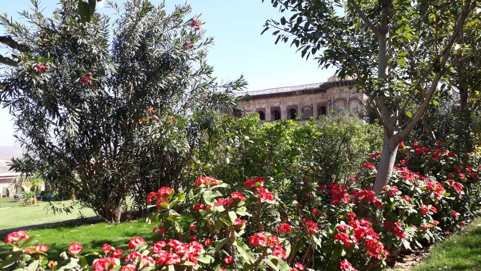 Flora Tijara Fort-Palace - 19th Century Alwar 2