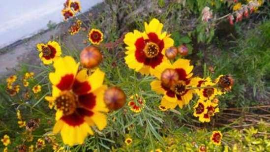 Wallwood Garden - 19th C, Coonoor  Pomological Gardens Wallwood Garden Coonoor