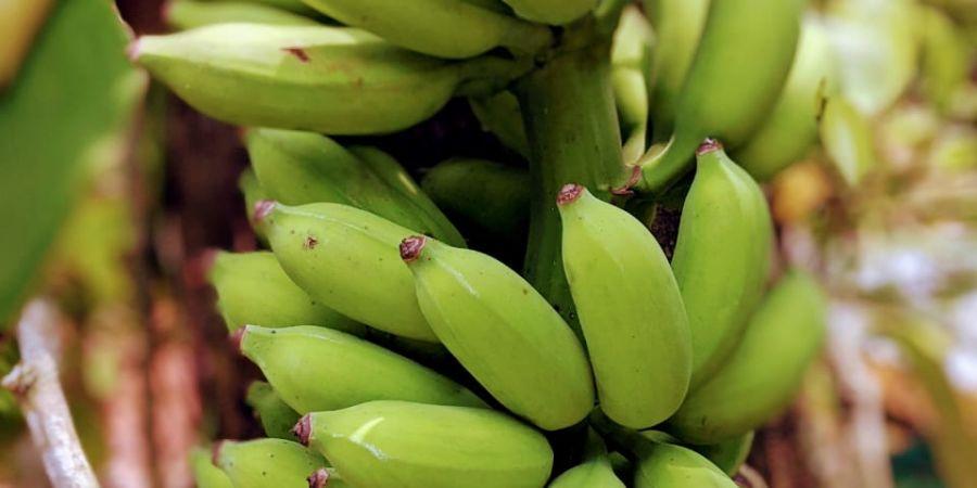alt-text banana