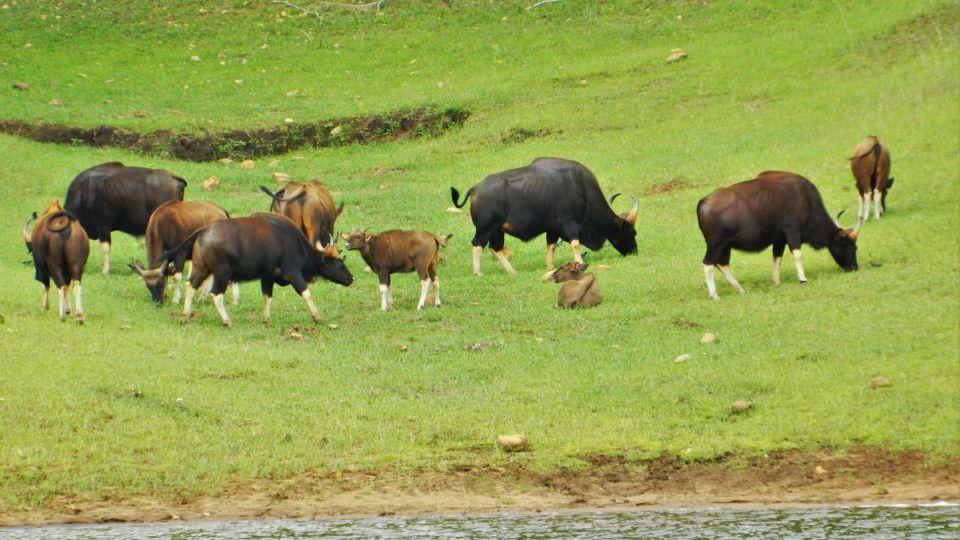 Periyar National Park, Poetree Sarovar Portico Thekkady, hotels in thekkady