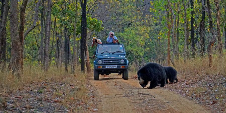 alt-text 4X4 Game Drive at Satpura National Park, Wildlife Safari at Satpura National Park, Wildlife Sanctuary close to our resort in Satpura, Drive through the Satpura National Park, Satpura Resort, Jungle resorts in Madhya Pradesh, Forest resorts in Madhya Prades