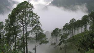 Deblok Group  Nainital-Hills-Udayan