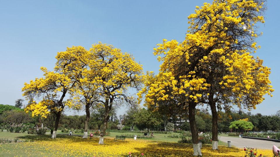 Rose Garden near Hometel Chandigarh, places to visit in Chandigarh
