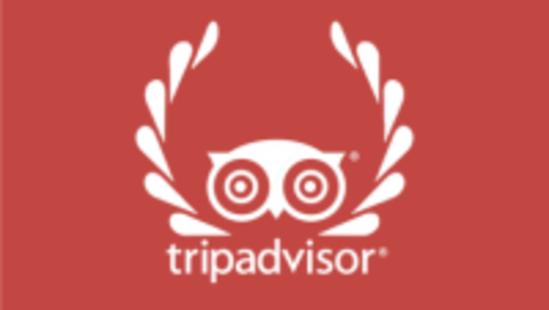 tripadvisor widget tree of life