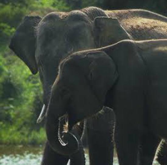 OTP - Destination Guide to the South Coast of Sri Lanka 24