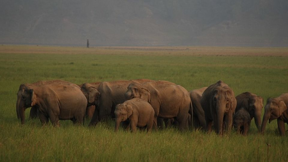 Elephant Herd at Corbett National Park near Infinity Resorts Corbett